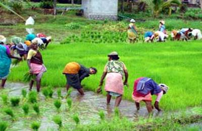 In a bid to woo farmers, Centre increases MSP of paddy by Rs. 200 per quintal