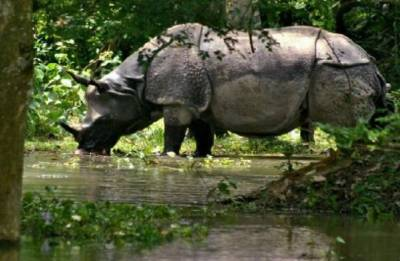 Eight rhinos die after move to a new park in Kenya