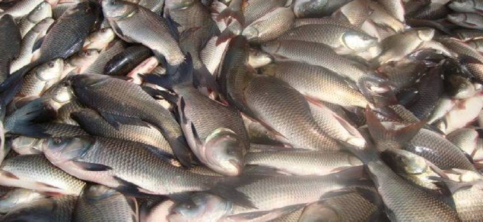 Will ban fish import if impurities are found: Goa Minister (Photo: Facebook)