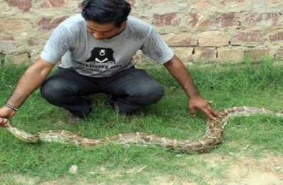 Two snakes rescued from Delhi: Wildlife SOS