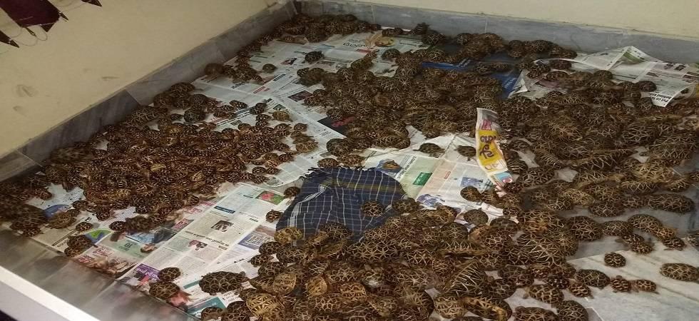1,125-star tortoises seized from 3 train passengers in Andra Pradesh (Photo- Twitter/ANI)