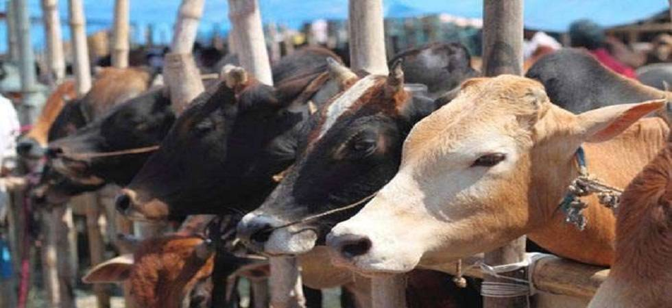 Hapur lynching: Where is cow asked villagers ( Photo: Twitter/ @UdayMahurkar )
