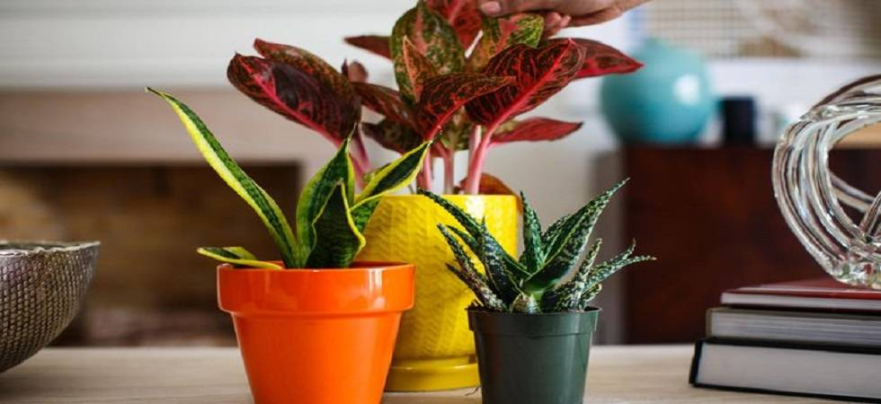 Indoor plants to keep office healthy ( Photo: Twitter/ @smarthome2017 )
