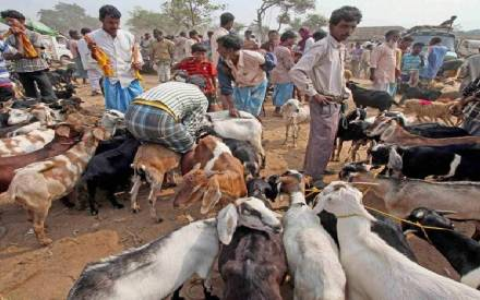 Bakra Eid: Date, significance and history - News Nation