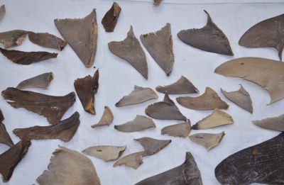 DRI seizes 8,000 kgs of shark fins bound for China