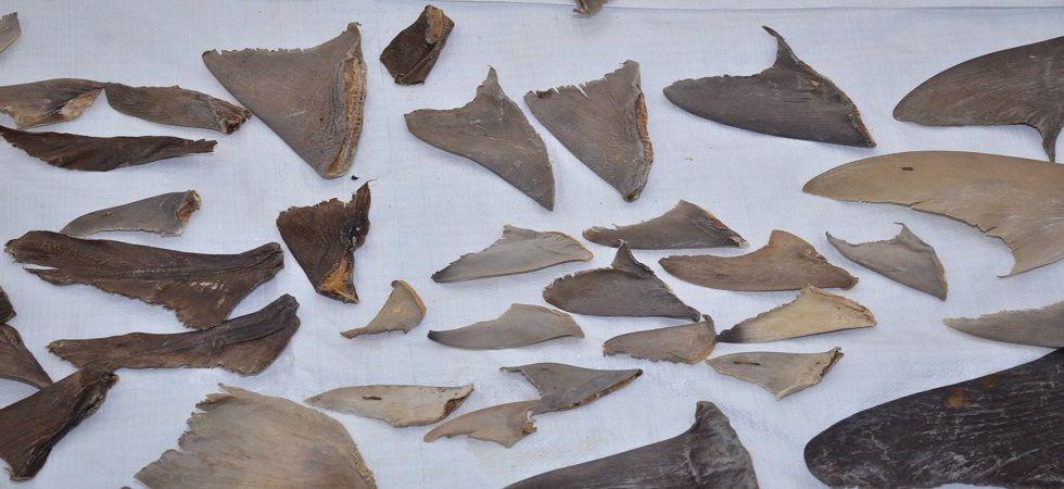 DRI seizes 8,000 kgs of shark fins bound for China (Photo: Twitter/ANI)