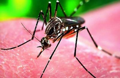 Woman tests positive for Zika virus in Rajasthan