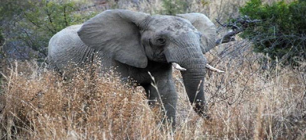Maharashtra: Elephant kills 30-year-old woman in Yavatmal district