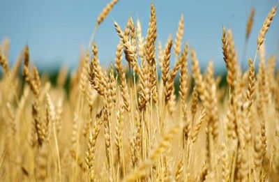 After farmers protest, Centre approves hike in MSP for Rabi crops