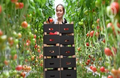Tomatoes are the ultimate heart food | Find out why