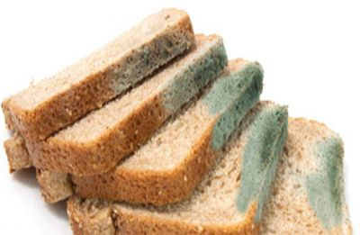Never eat the clean part of a moldy bread or sandwich! Here's why