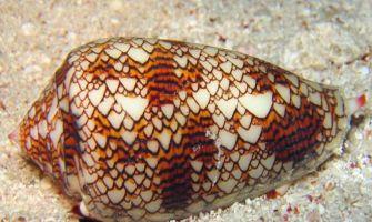 Climate change causing sea snail shells to dissolve: Study