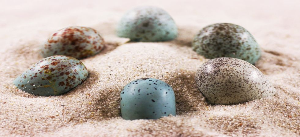 Dinosaur eggs had colourful eggs with spots, speckles and they were awesome (Representational Image)