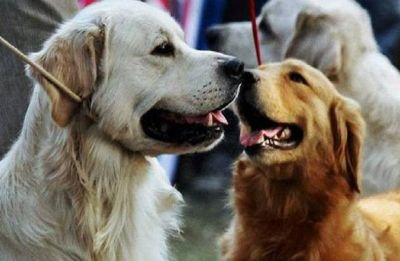 Delhi: Adoption drive helps abandoned dogs find homes