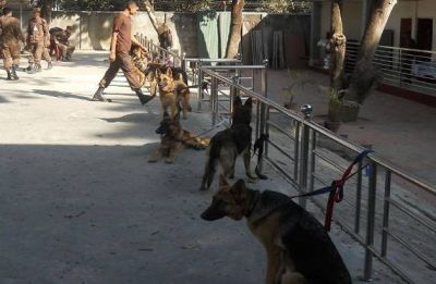 'Robo-nose' could soon give sniffer dogs a rest
