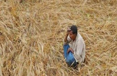 In Maharashtra, 235 farmers suicide in one month: State Government