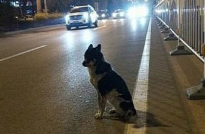 Dog waits for more than 80 days at the spot owner died – Video will break your heart