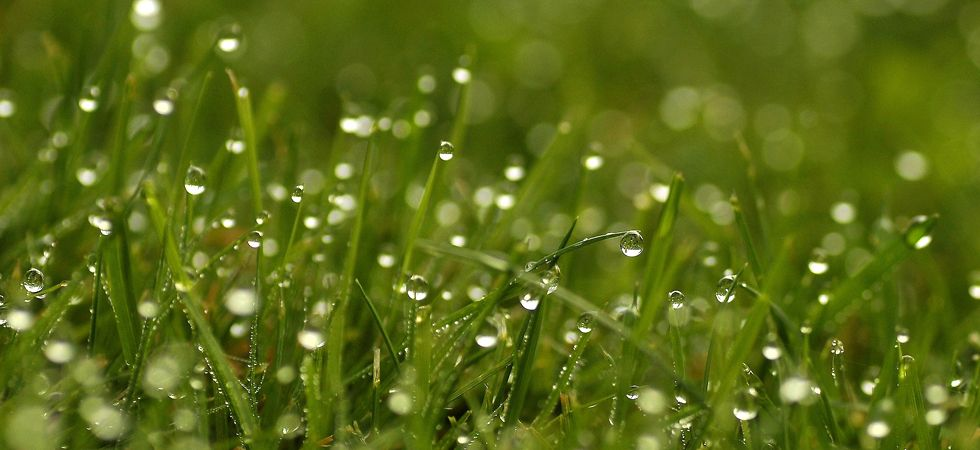 Pretty and fragile, the freezing dew drops sparkle in millions, in the chilly December morning.