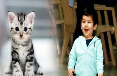 Taimur Ali Khan declares he's a cat lover, Watch his adorable video inside
