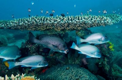 Don't believe in climate change? Look at our oceans warming at much faster rate, say scientists