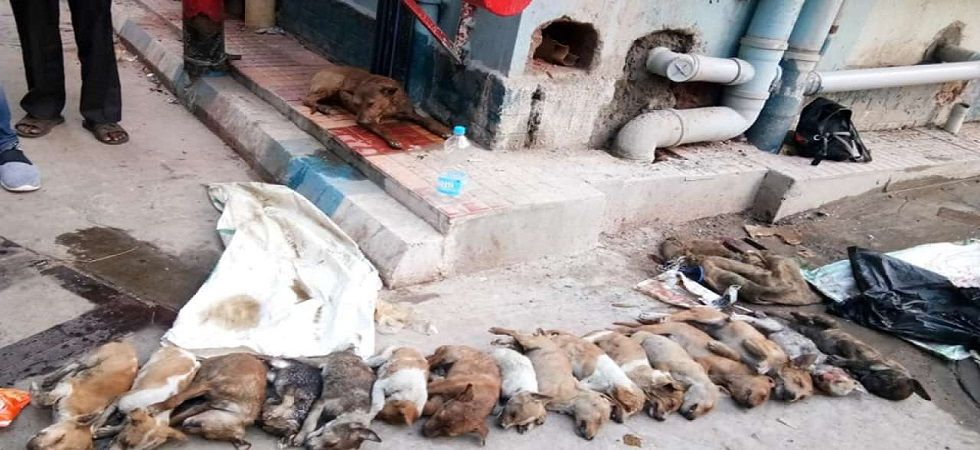 Animal lovers from different NGOs held a demonstration on Monday against the incident.