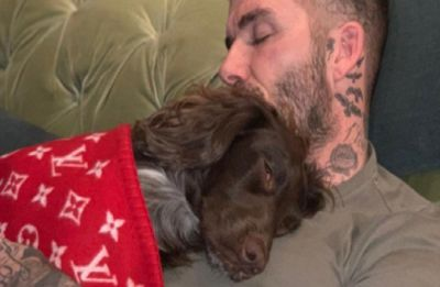 David Beckham's pooch illustrates the luxe life, snuggles in a Louis Vuitton blanket worth Rs 4 lakh