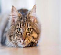 Customer orders cat food from Amazon, receives illegal stun gun instead!