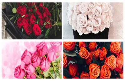 Happy Rose Day 2019: Your Valentine's rose colour holds significant meaning, find out what different colours signify