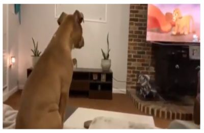 WATCH| This dog's emotional reaction to Musafa's death in Lion King is all of us