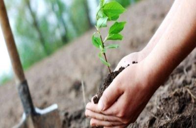 Plant five saplings, will recall arrest warrant: Ghaziabad court tells rape accused