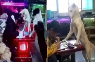 Watch VIDEO: Father trains pet dog to 'supervise' his daughter as she completes her homework