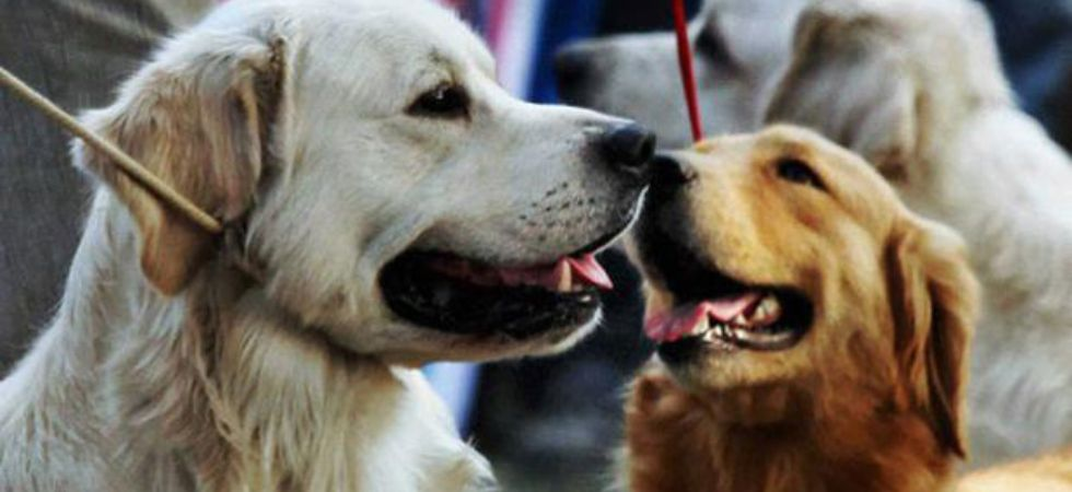Having pets may lower stress in older adults. (File Photo)