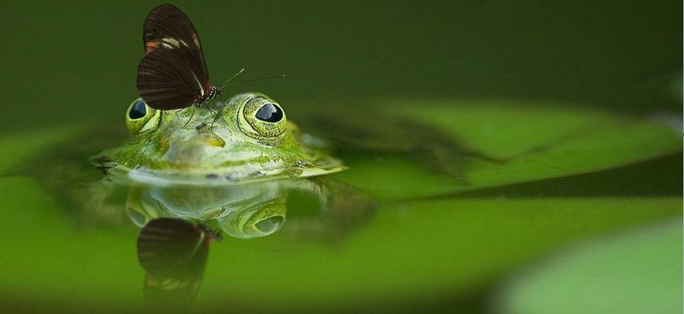 Life in ponds (Representational Image)