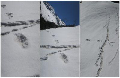 Yeti sighted in Himalayas? Indian Army tweets 'footprint' pics, creates buzz