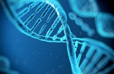 Embryo stem cells created from skin cells, says study