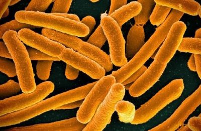 Scientists develop device to detect bacteria in minutes, not days