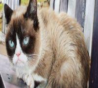 Internet legend Grumpy cat dies at 7, family shares emotional post on social media