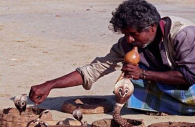 Music from Indian snake charmer's flute may boost brain development of premature infants: Study