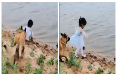 WATCH | Viral video of a dog saving girl child from deep water leave netizens with happy tears