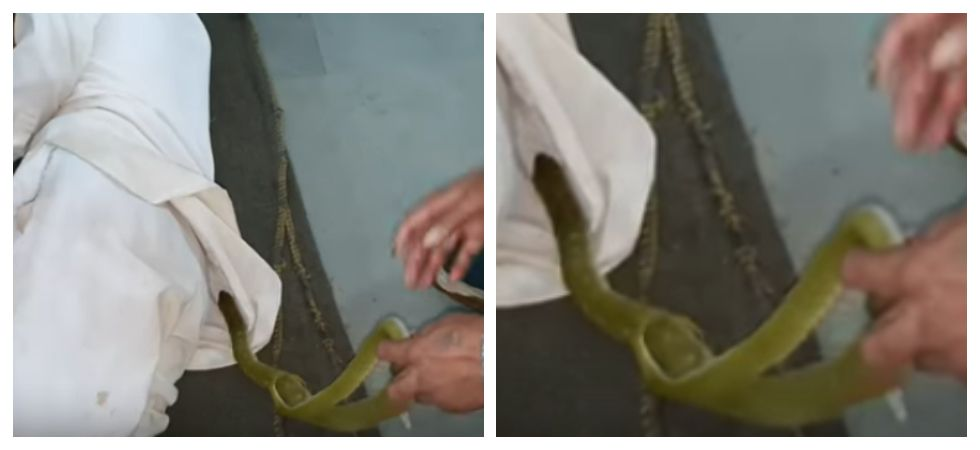 Venomous green snake removed from sleeping man's shirt (Photo: YouTube)