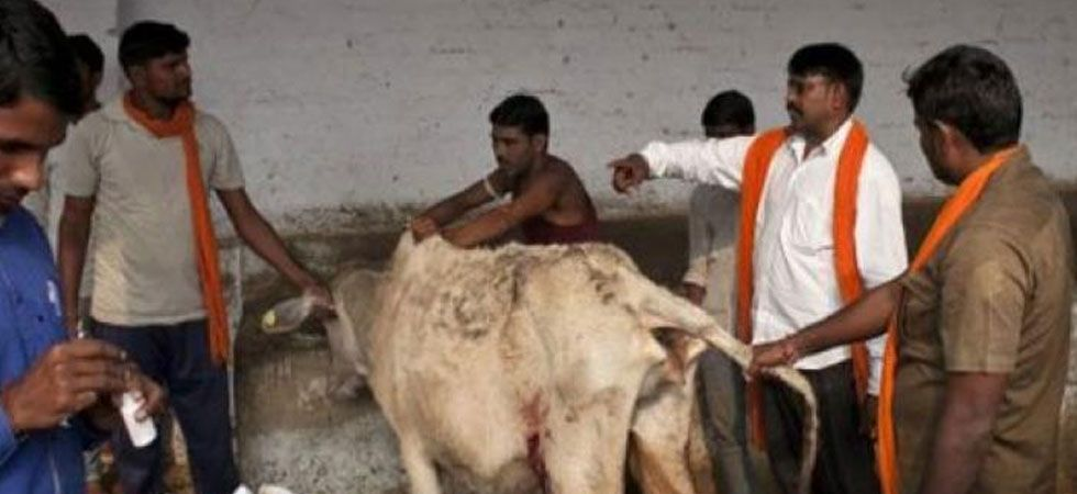 Once enacted, Madhya Pradesh will become the first state to have a law against cow vigilantism. (PTI Photo)
