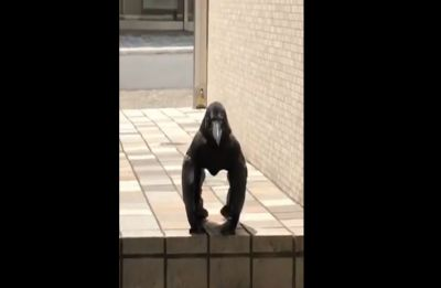 Crow or gorilla - Bizarre video leaves netizens baffled; can you solve this mystery?