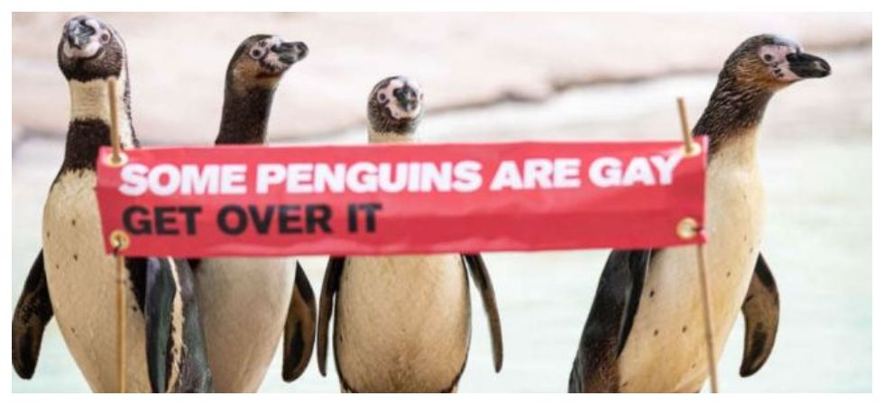 London zoo holds first ever pride parade for gay penguins (Photo: Twitter)