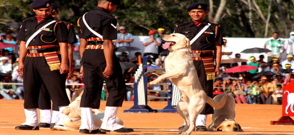 A full unit of the Army comprises 24 canines and half consists of 12.