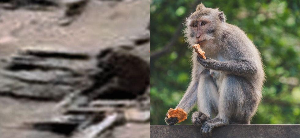 Monkey on Mars (Photo Credit: ET Data base)