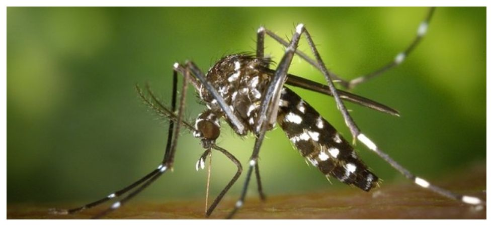 Mosquitoes have been found to be able to smell blood types (Photo: Instagram)