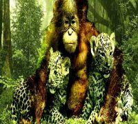 Deforestation + climate change = dead end for wildlife