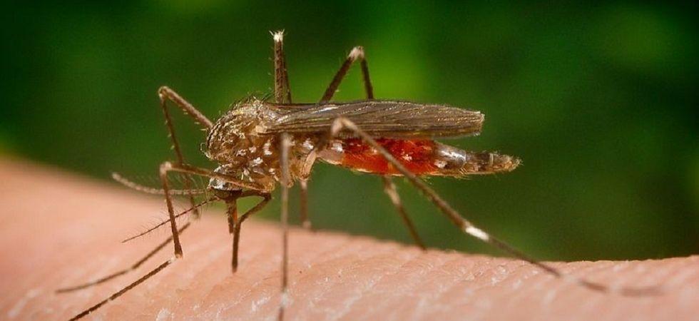 Japanese Encephalitis spreading mosquito (Representational Image)