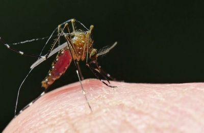 Over 60 malaria cases reported in Delhi till July, 27 affected by dengue