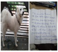 Dog owner abandons dog, claims it had 'illicit relationship' with neighbour's dog